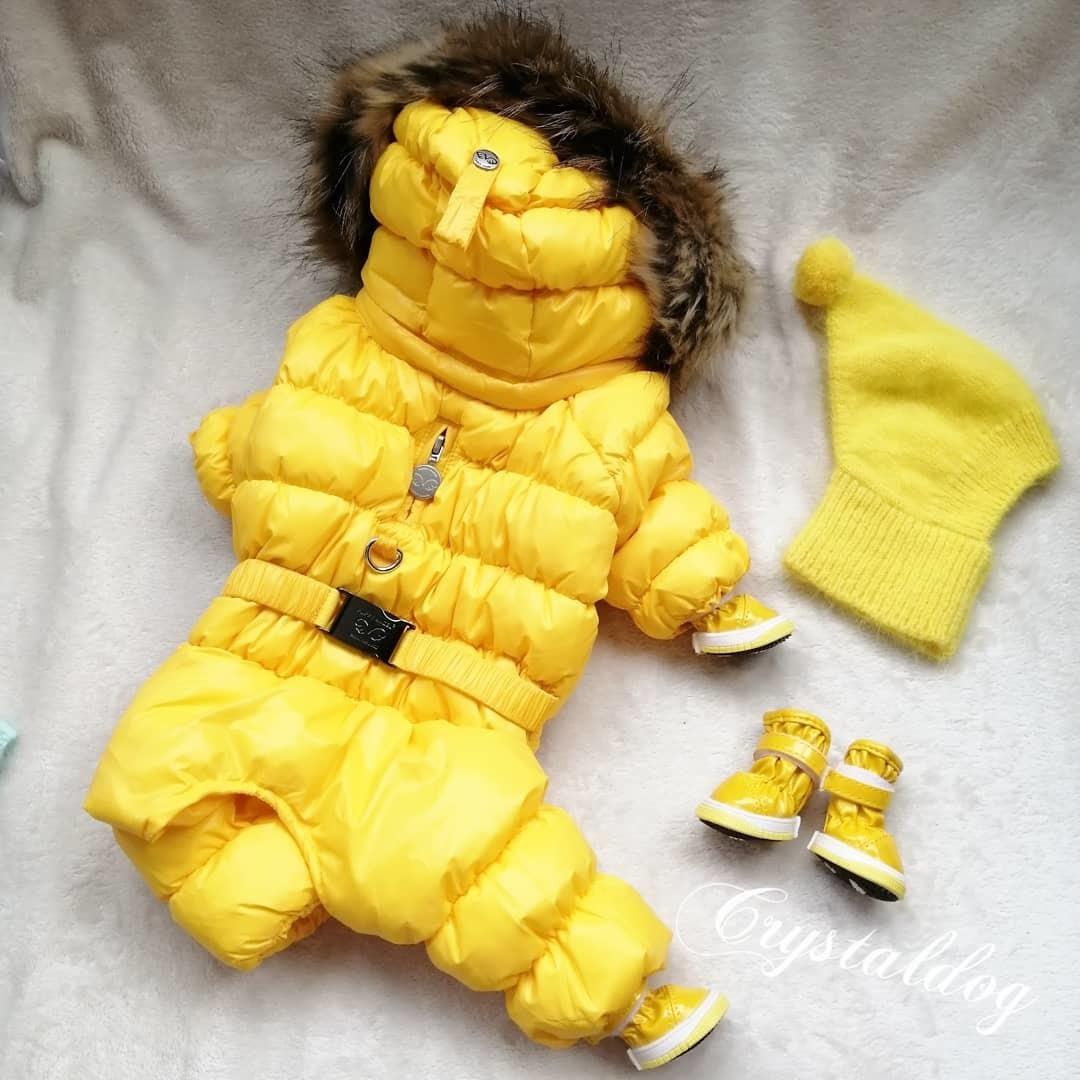 зимняя одежда для собак