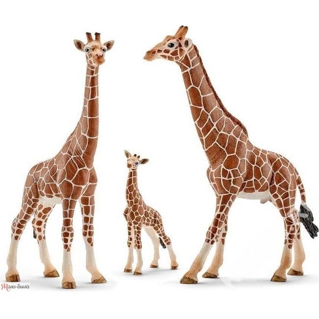 Фигурка «Жираф, самец» Schleich