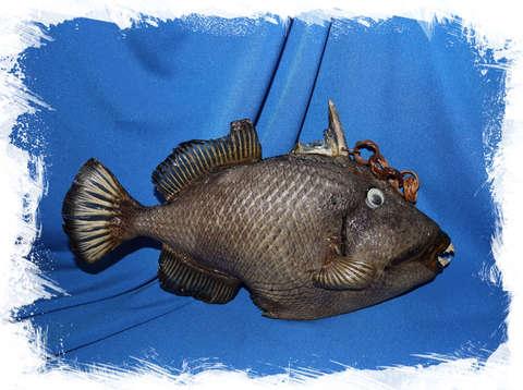 Коралловая рыба