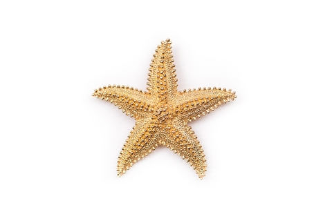 Красивая брошь Морская звезда от Monet.