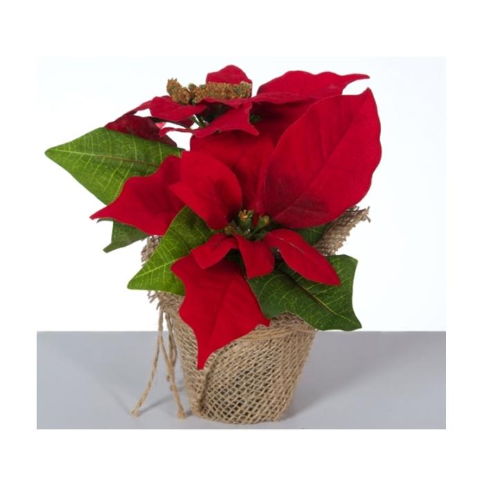Декоративное растение в кашпо