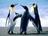 """""""Пингвины"""""""