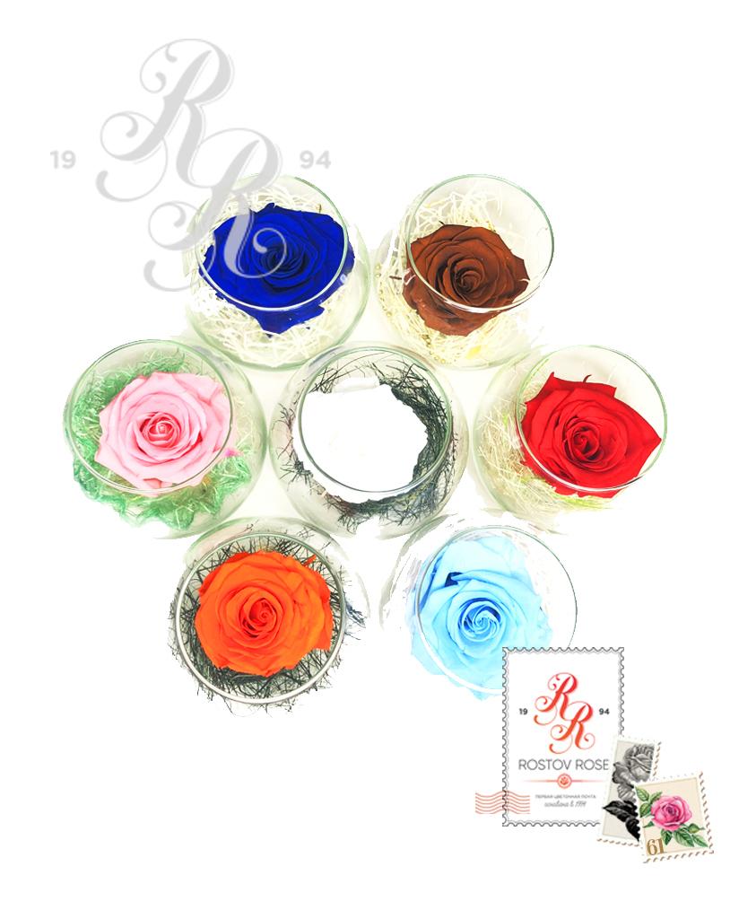 Роза коралловая в бокале