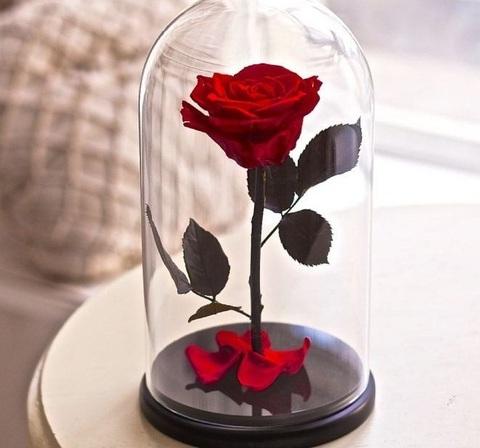 Живая роза в колбе
