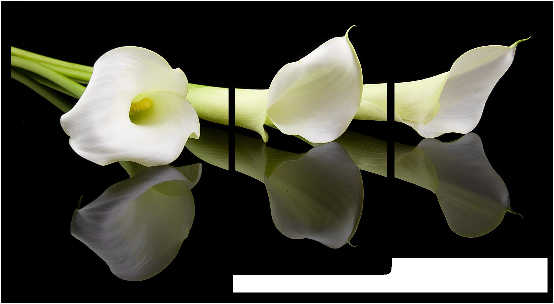 "Цветы Модульная картина ""Белые каллы"" М759.png"