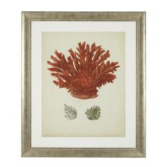 Eichholtz Antique red corals картина 111741