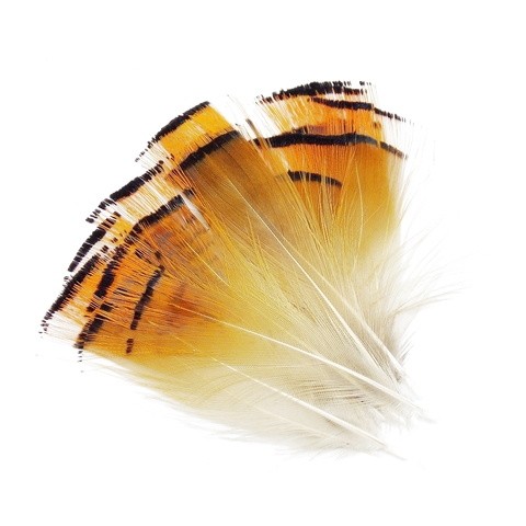 WAPSI Шейные перья золотого фазана Golden Pheasant LARGE TIPPETS