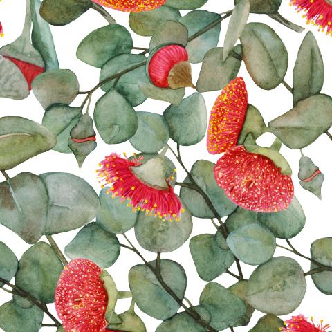Цветы эвкалипта.