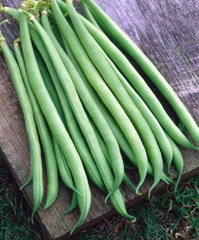 Семена Фасоль спаржевая Сиренгети  (Syngenta) 50 гр