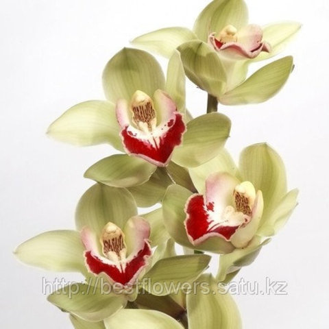 Орхидея (НЕ ГОРШЕЧНЫЕ)