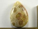 Кабошон коралла окаменелого, капля, 25x18x7 мм (1)