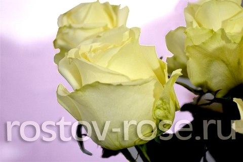 Букет роз Аваланш