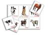 Домашние животные. Лошадь и другие. Развивающие пособия на липучках Frenchoponcho (Френчопончо)