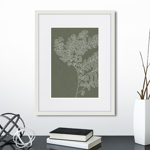 - The fern collection №15