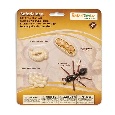 Набор фигурок Жизненный цикл муравья, Safari Ltd.