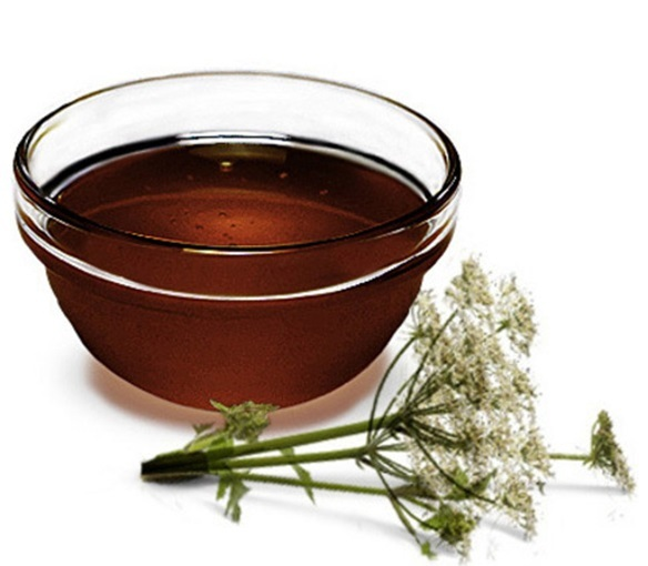 Дягилевый мёд фото1
