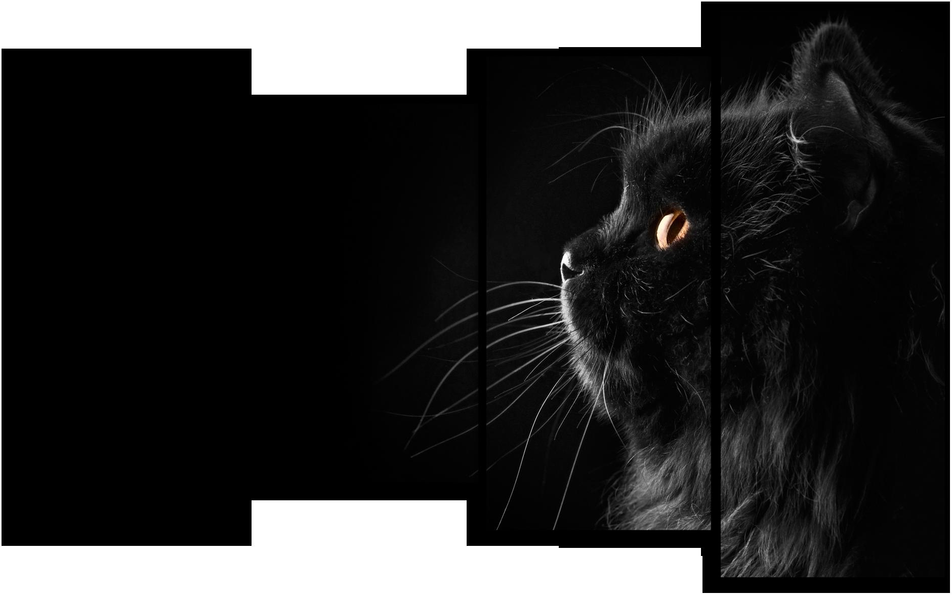 """Модульные картины Модульная картина """"Черный кот"""" М871.png"""