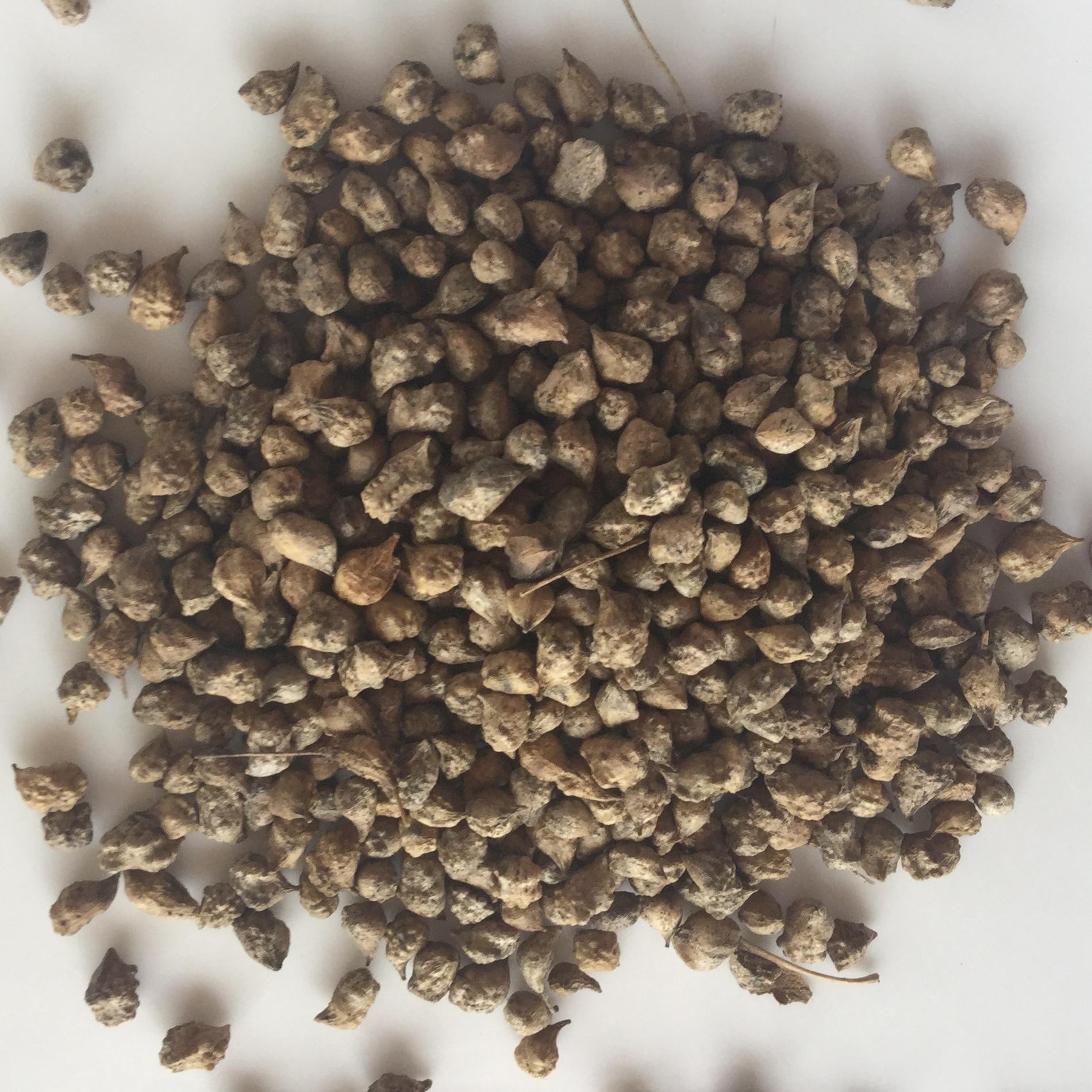 Семена свербига