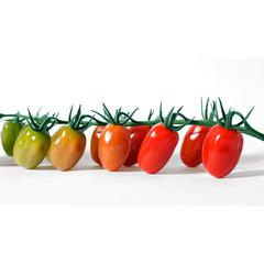 Анжела F1 семена томата индетерм., (Syng.)