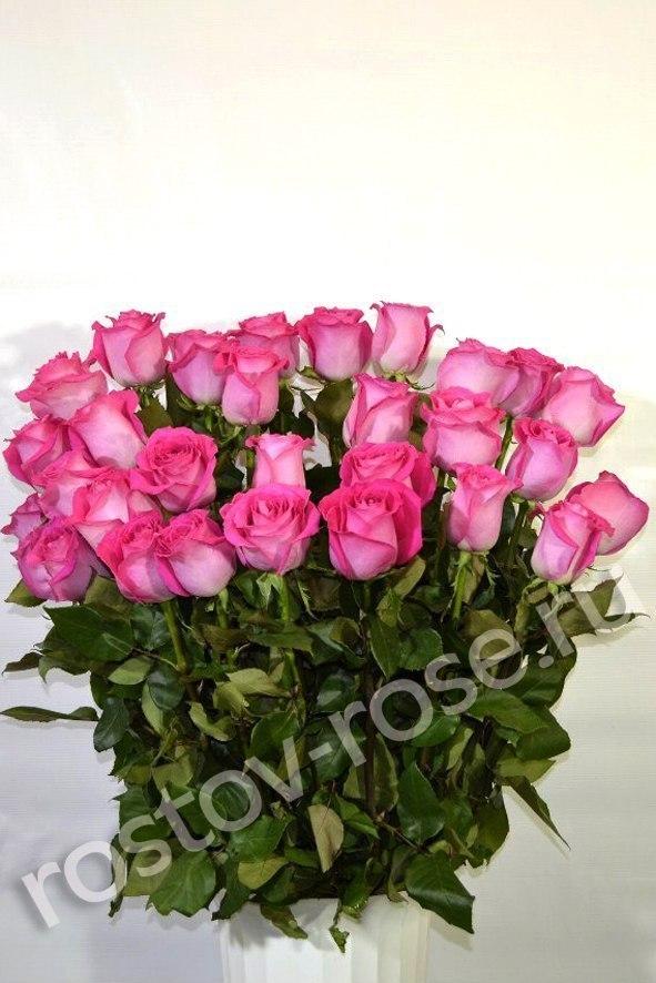 Букет 25 розовых роз (Эквадор)
