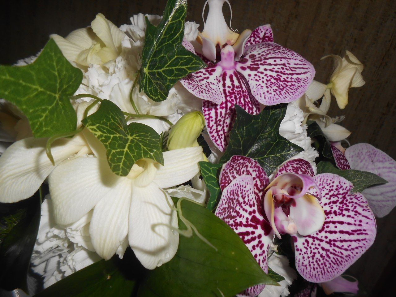 + орхидея фалинопсис