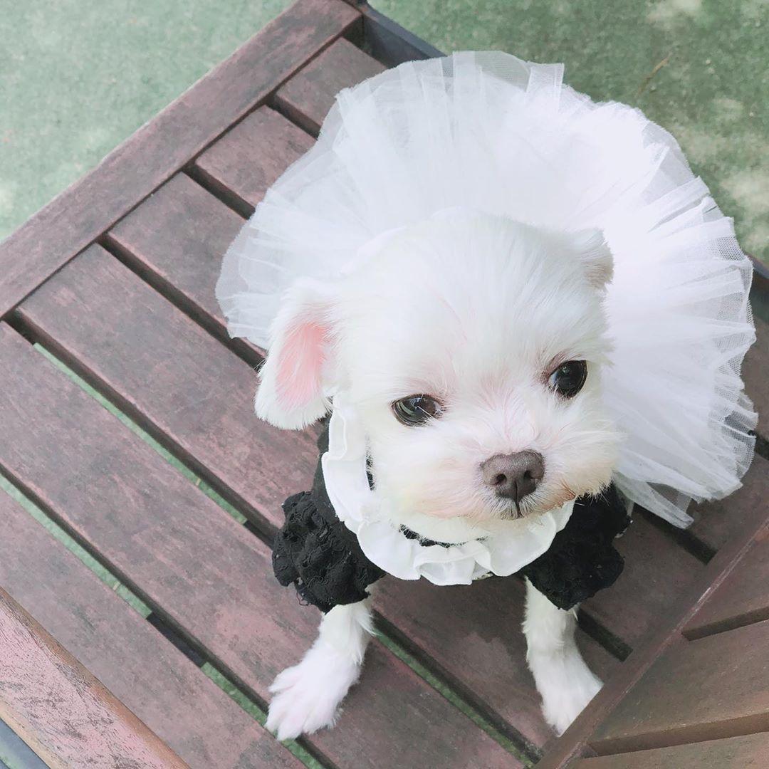339 PA - Блуза для собак