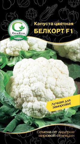 Семена Капуста цветная Белкорт F1 (Rijk-Zwaan) 10 сем
