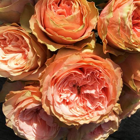 Роза флорибунда Кахала