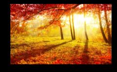 """Постер """"Осенний листопад"""""""