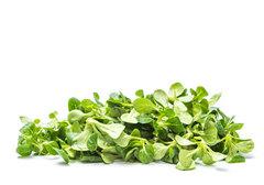 Микрозелень дайкона, 100г