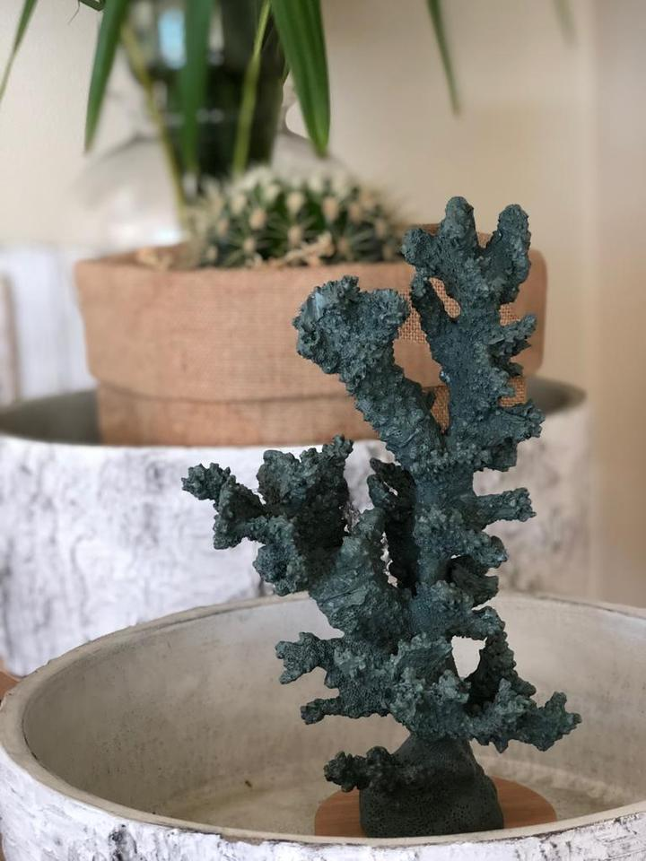 Коралловое дерево (Tree coral)