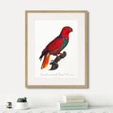 Джон Гульд - Beautiful parrots №9, 1872г.