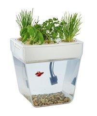Акваферма - аквариум с набором для выращивания растений.