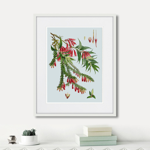 Уолтер Гуд Фитч - Himalaya Plants Red Flower Branch, 1869г.