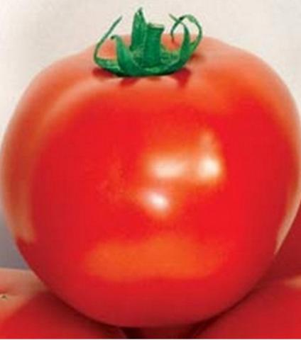 Семена Томат TMAG-666 F1 (Sakata), ОГ 10 сем