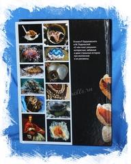 Книга о ракушках вторая сторона