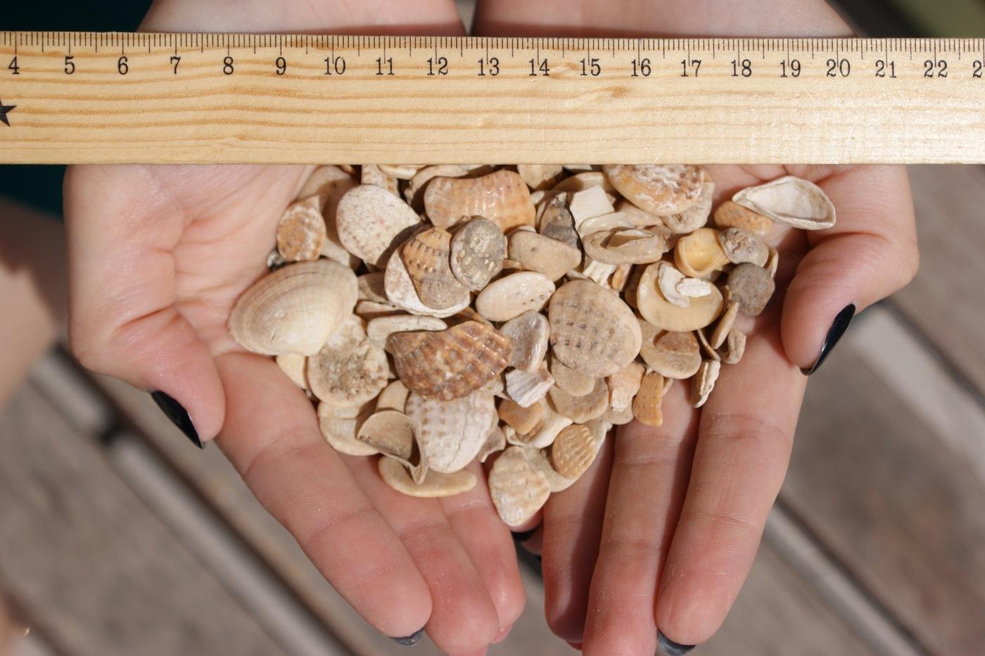 морская ракушка, фото в руке