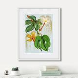 Уолтер Гуд Фитч - Himalaya Plants Hodsgonia Flower White And Yellow, 1869г.