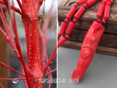 красные ветви клёна и колье Коралловый клён