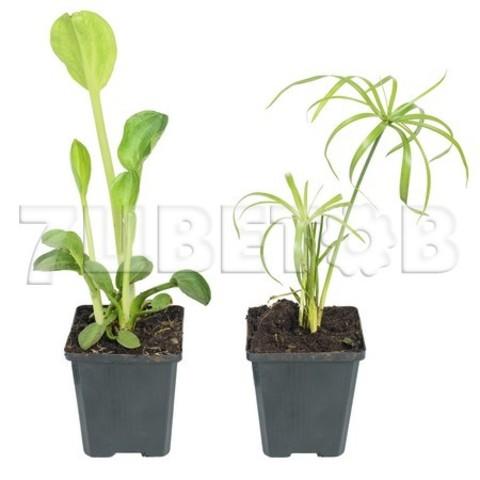 Водные Растения Микс_room169