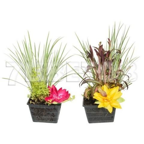 Водные Растения Микс_room170