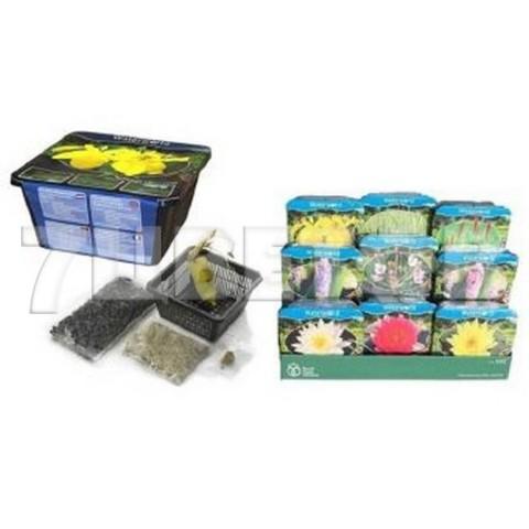 Водные растения Микс в коробке_room171