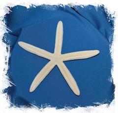 Морская звезда Фингер 14-20 см