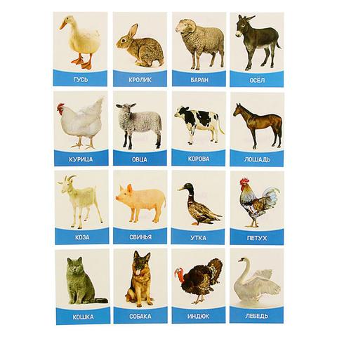 Обучающие карточки