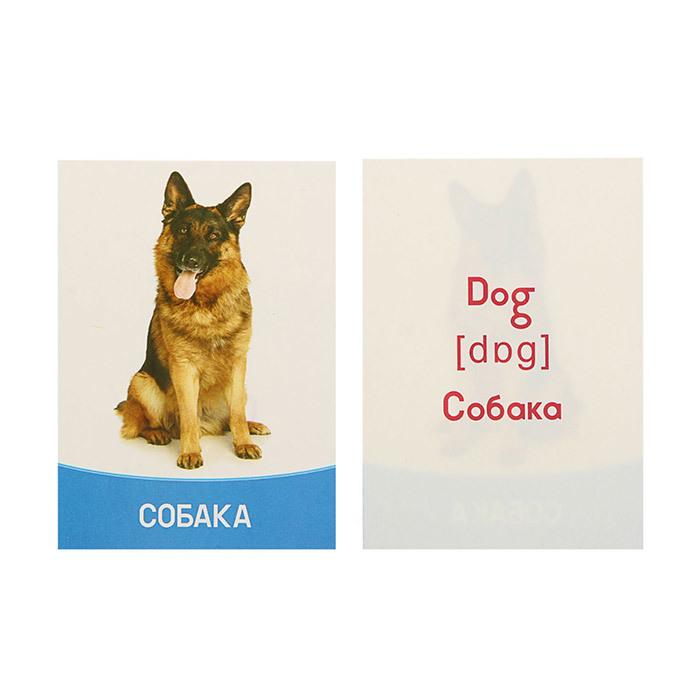 Дидактические карточки животные