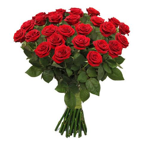 Розы эквадор в ассортименте (25шт, 70см)