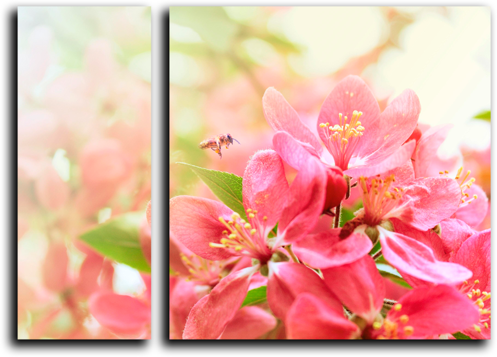 "Модульная картина ""Цветущая сакура""  Цветущая Сакура Png"