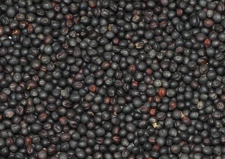 Рапс семена BIO, 100 гр