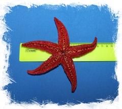 Амурская морская звезда 12-15 см