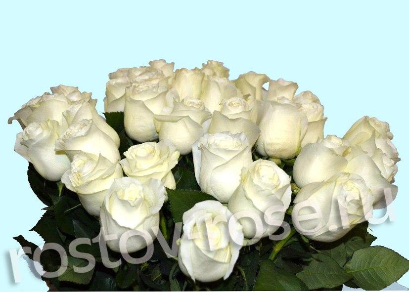 Букет из Голландских белых роз, сорт Прауд